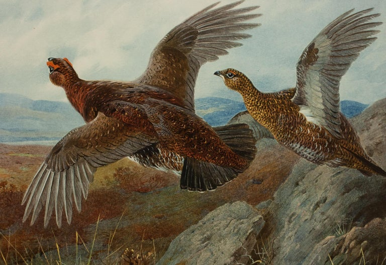 Antique Shooting Print, the Seasons by Archibald Thorburn, Summer, Grouse In Good Condition For Sale In Oxfordshire, GB