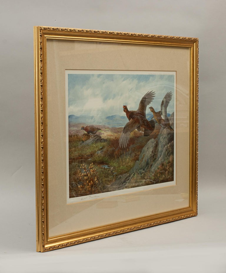 Wood Antique Shooting Print, the Seasons by Archibald Thorburn, Summer, Grouse For Sale