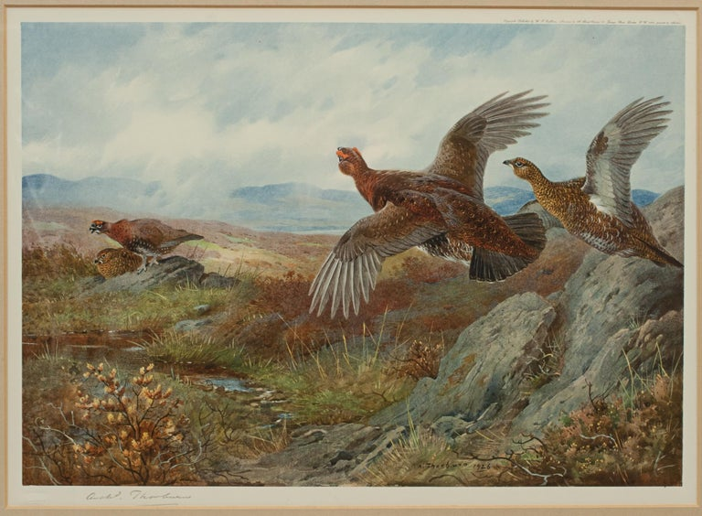 Antique Shooting Print, the Seasons by Archibald Thorburn, Summer, Grouse For Sale 1