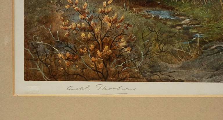 Antique Shooting Print, the Seasons by Archibald Thorburn, Summer, Grouse For Sale 2