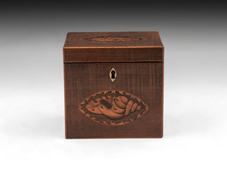 Antique Harewood tea caddy with inlaid conch shells on the front and top and bone escutcheon.   The Georgian single tea caddy interior features a floating lid with bone handle, which would of sat on top of the loose tea to keep it fresh.