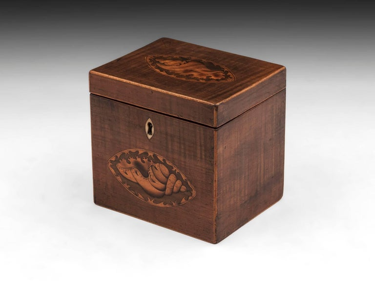 George III Harewood Antique Single Wooden Tea Caddy with Conch Shells, 18th Century For Sale