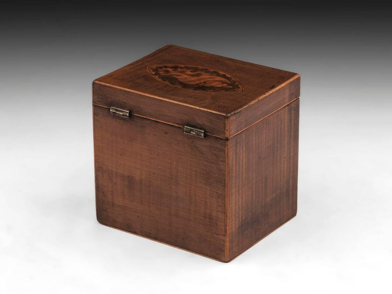 British Harewood Antique Single Wooden Tea Caddy with Conch Shells, 18th Century For Sale