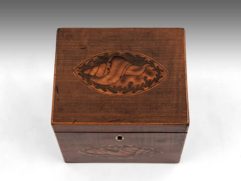 Harewood Antique Single Wooden Tea Caddy with Conch Shells, 18th Century In Good Condition For Sale In Northampton, United Kingdom