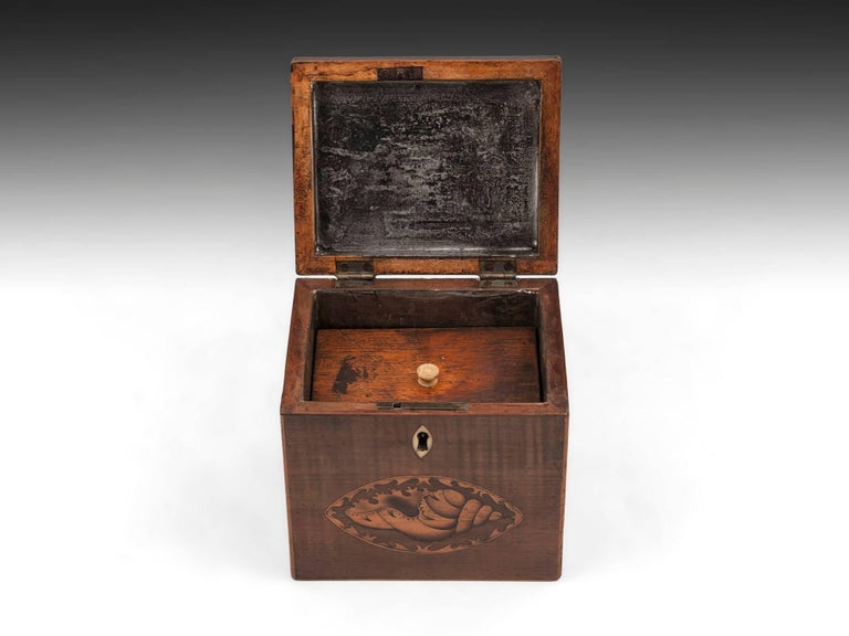 18th Century and Earlier Harewood Antique Single Wooden Tea Caddy with Conch Shells, 18th Century For Sale