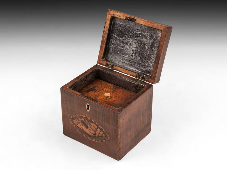 Harewood Antique Single Wooden Tea Caddy with Conch Shells, 18th Century For Sale 1