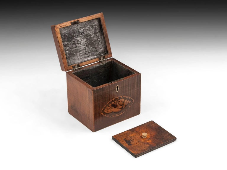 Harewood Antique Single Wooden Tea Caddy with Conch Shells, 18th Century For Sale 2