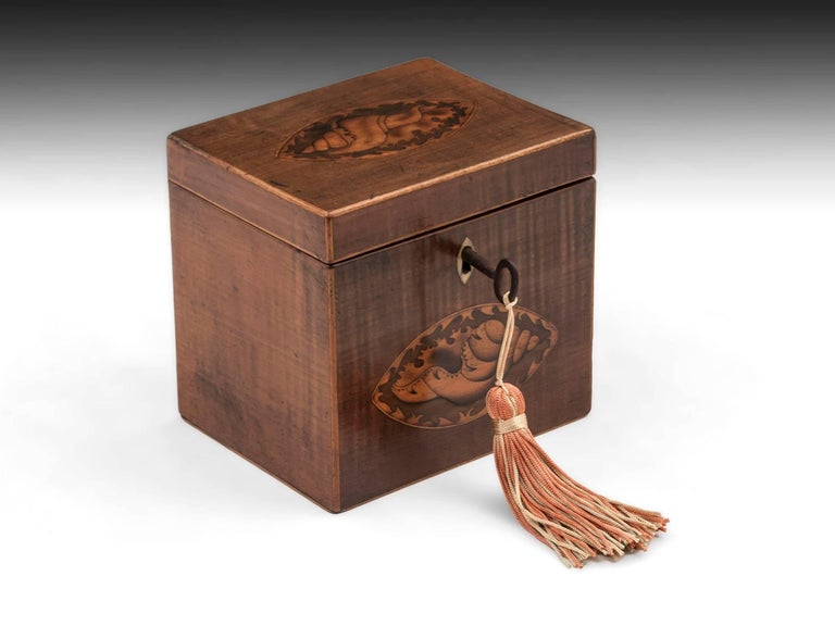 Harewood Antique Single Wooden Tea Caddy with Conch Shells, 18th Century For Sale 3