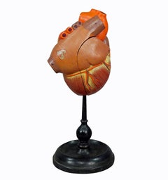 Antique Somso Plaster Model of a Human Heart