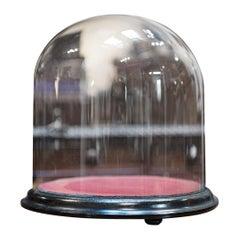 Antique Taxidermy Display Dome, Glass, Showcase, Davis & Co, Bristol, Victorian