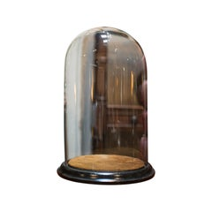 Antique Taxidermy Showcase, English, Glass, Leather, Display Dome, 19th Century