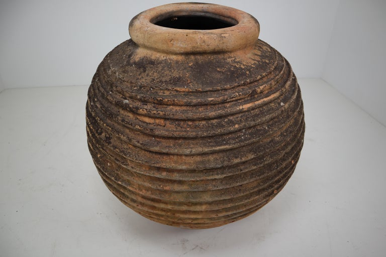 19th Century Giant Antique Terracotta Ribbed Olive Jar with Dark Lichen Patination For Sale