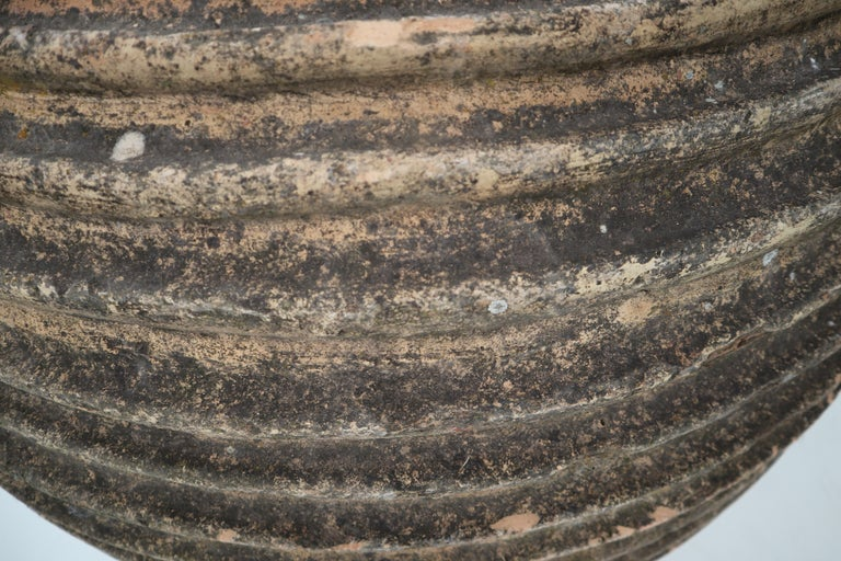 Giant Antique Terracotta Ribbed Olive Jar with Dark Lichen Patination For Sale 2