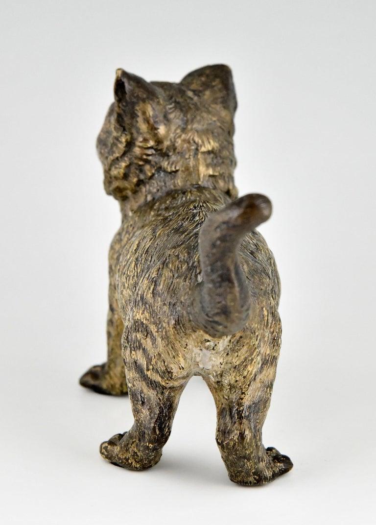 Antique Vienna Bronze Sculpture of a Cat by Bergman, Austria, ca. 1900 For Sale 1