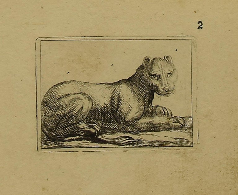 The lioness is a wonderful black and white etching on thick laid paper, realized by the Italian master Antonio Tempesta (1555-1630).  Not signed.   In excellent conditions.  Including a cream-colored cardboard passepartout,  34 x 49 cm. Image