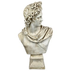 """A Bust of the Apollo Belvedere in Plaster-24"""" Tall"""