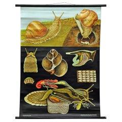 Apple Snail Escargot Jung Koch Quentell Vintage Poster Print Wall Chart