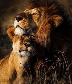 Araquém Alcãntara - Lion and lioness II, Tanzania, Africa