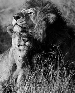 Araquém Alcãntara - Lion and lioness, Tanzania, Africa
