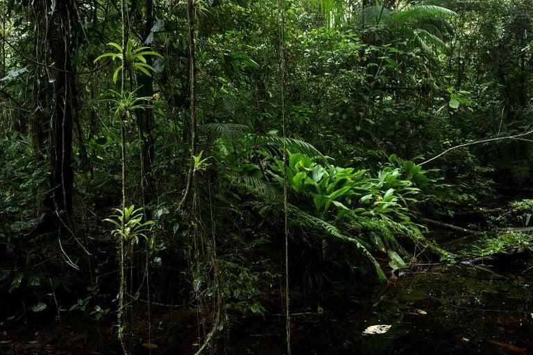 Araquém Alcântara Landscape Photograph - Tropical Rainforest, Sao Miguel Arcanjo, Brazil