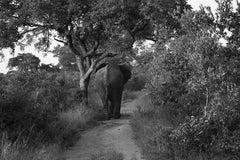 Elephant, Zimbabwe, Africa Wildlife