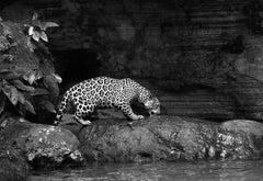 Jaguarete #6, Brazil