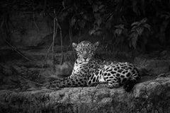Jaguarete #3, Brazil, Wildlife