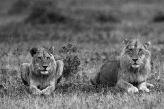 Lions, Tanzania, Africa  (Wildlife Africa)