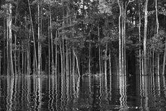Rio Negro (detail 2), The Amazon, Brazil
