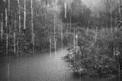 Rio Negro, Detail I, The Amazon Forest, Brazil