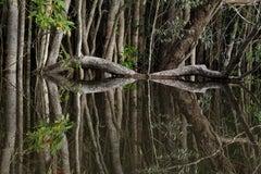 Rio Preto da Eva, The Amazon, Brazil