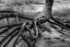 Roots I, Cumuruxatiba Beach, Bahia, Brazil (Photograph)