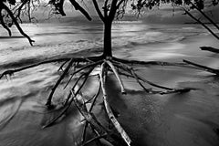 Roots II, Cumuruxatiba Beach, Bahia, Brazil
