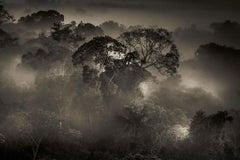 The Amazon Forest I, Alta Floresta, Mato Grosso, Brazil