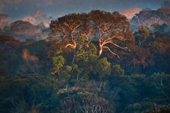 The Amazon Forest II, Alta Floresta, Mato Grosso, Brazil