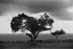 Trancoso (tree), Bahia, Brazil