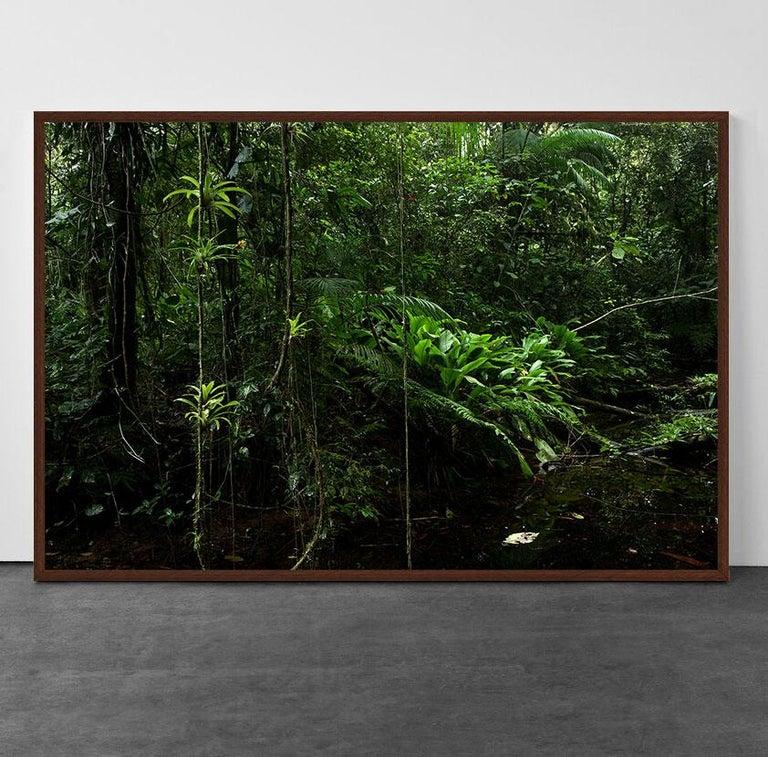 Tropical Rainforest, Sao Miguel Arcanjo, Brazil - Photograph by Araquém Alcântara