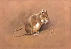 A field mouse