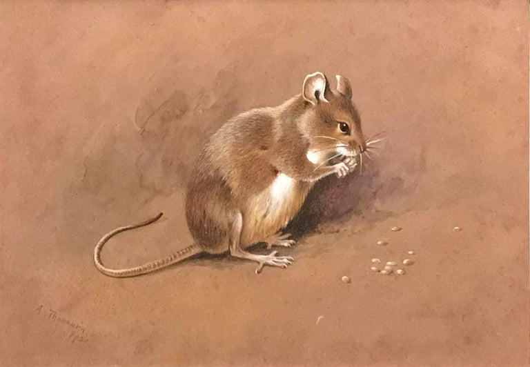 Archibald Thorburn Animal Painting - A field mouse
