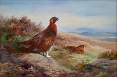 Grouse - Watercolour by Thorburn