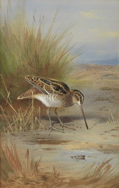 Snipe - Watercolour by Thorburn