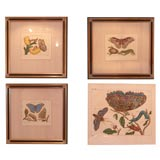 Four Hand Colored Copperplate Engravings of Moths