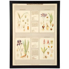 Set of Four Late 19th Century Italian Botanical Prints