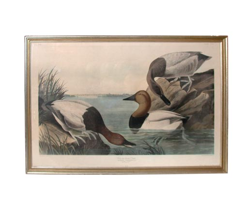 Framed Print Of Canvas Backed Duck At 1stdibs