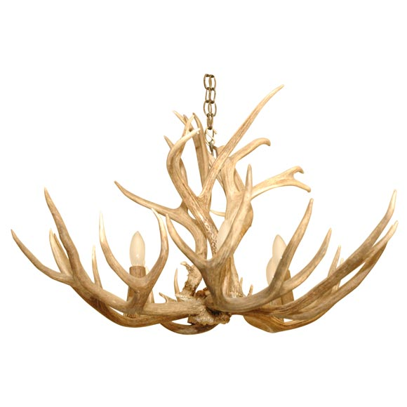 Stag Horn Chandelier: 5 Point Stag Horn Chandelier 1,Lighting