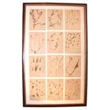 Framed Botanical Study