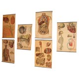 Six Nineteenth Century Anatomical Prints on Canvas