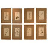 Set of Fifteen Pressed Botanicals