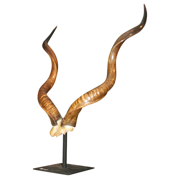 Rare Mounted Kudu Horns For Sale