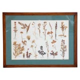 FRAMED CALIFORNIA FLOWERS-DRIED AND MOUNTED-DATED 1946